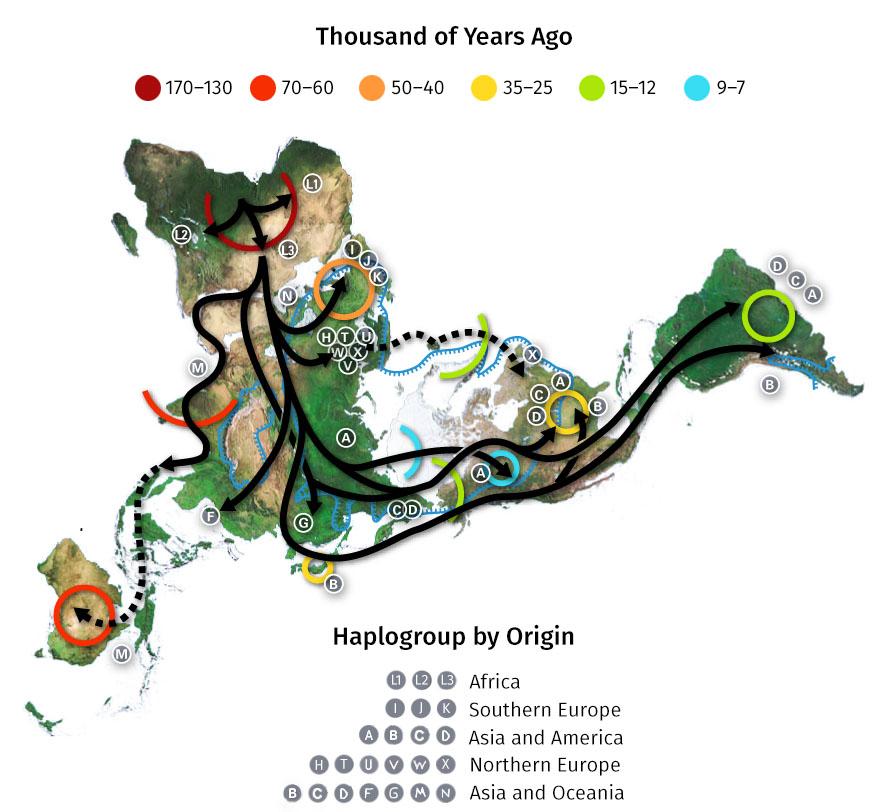 en56-anthropological-human-types_02