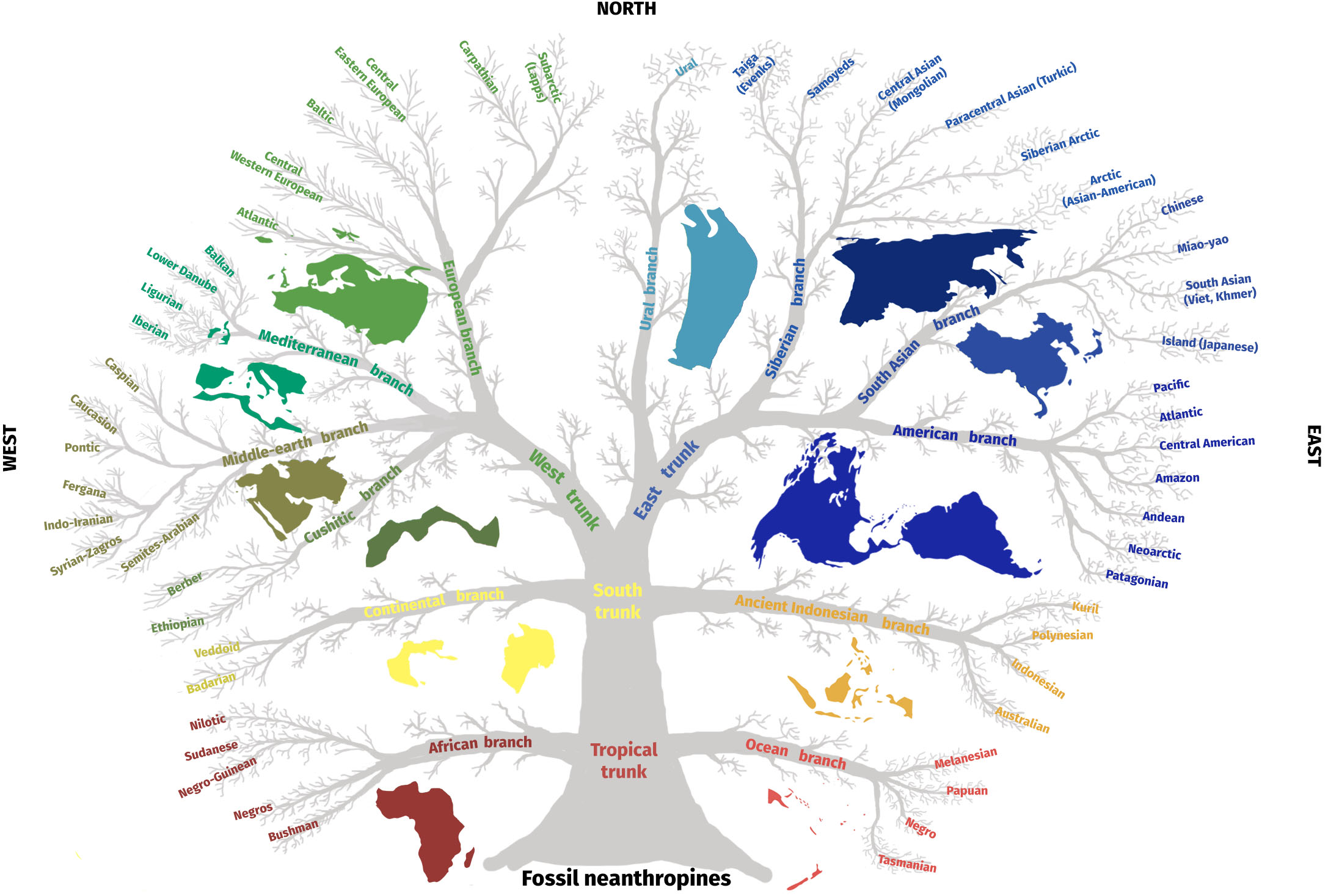 en56-anthropological-human-types_04